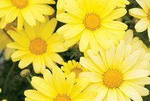 Color - Yellow / by Manon van den Arend
