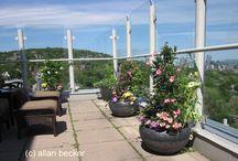 Penthouse Gardening