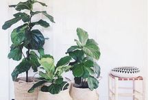 Interior Plants / Beautifying your interior design with plants