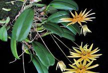 Орхидеи / Orchids
