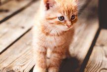 kedi en sefdiğimden :)