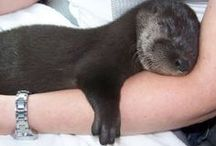 Otters!!!!!!