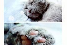 Chats gris