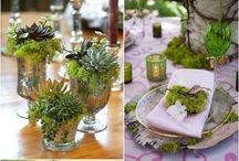 Claire wedding x