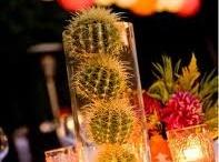 Cactus / by Alex del Solar