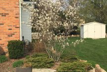 Native Plants / Pictures of native plants taken in 2015.