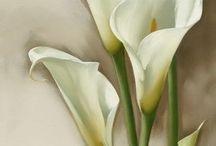 obrázky kvetov