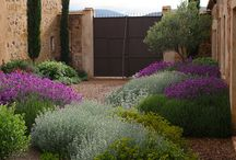 Gardens / Water-saving plants and plans for gardens