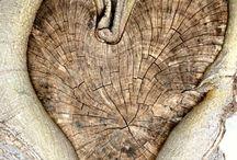 Carte arbres