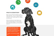 Dog web design