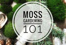 Garden/plant ideas