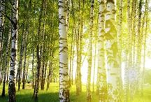 Trees - alberi