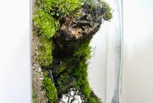 side terrarium