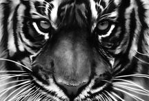 <<<<<Bestiaire Chic<<<<< / Léopard, zébré, tigré, tâcheté tous les imprimés bestiaires débarquent dans votre garde robe, shoppez les sur Monshowroom.com pour être à la pointe de la mode !! / by MonShowroom.com ♥