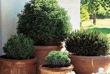 Jardines decor