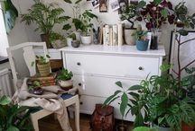 • lots of plants