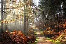 Cannock chase amazing and so close go for a walk and get lost