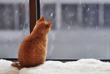 rude koty :)