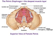 Gynaecology and obstetrics diagrams
