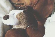 my guys a dashound / by Janice Lighter