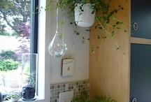 indoor plants / by Farah Aziz