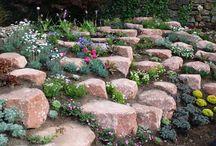 Alpine garden/Skalničky