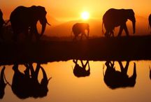 Elephants and Whales / I have a deep love for these big creatures