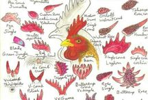 Poultry / by Donna