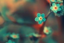 Garden - Nature