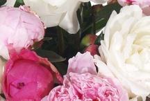 Pioenroos / #pioenroos #pioenrozen #peonia #bloemen  / by verstuureenbloemetje.nl
