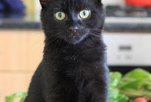 Kutest Kitties