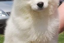 Rakker / Mijn hond