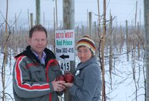 Red Prince in the News! / Some of our favourite news stories about Red Prince Apples!
