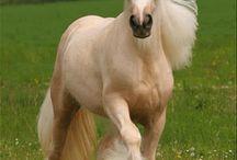 Sadık Dostlar ( Atlar ) / HUZUR SOKAĞI (Yaşamaya Değer Hobiler)