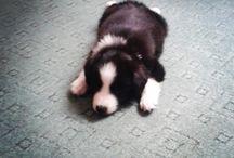 my dog Sia