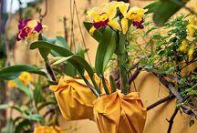 orquídeas como cuidar 2017