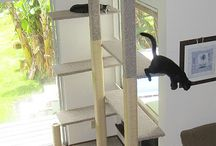 Neffa Paradise / Cat interior run