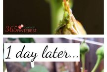 Gardening tips (incls getting rid of bugs)