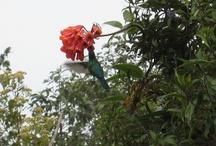 Costa Rica Wildlife / Tropical birds, monkeys, jungle cats, armadillos, halloween mangrove crabs and murcialagos