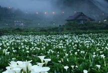 Flowers i looove