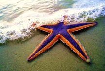 Starfish Troopers