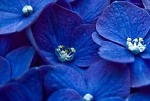 Blue / Couleurs
