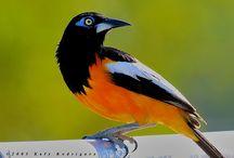 Dieren vogel troepiaal