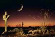 Arizona / by Tamara