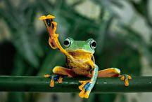Froggg