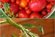 vegetable growing tips