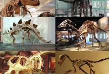 Science and Technology / Welcome to the wonderful world of science and technology. From dinosaurs to apps, these are some things I find interesting.  Hope you do to.