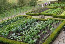 Ha egyszer zöldségeskertem lesz