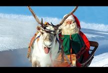 Reindeer of Santa Claus / Discover the reindeer of Santa Claus Father Christmas. The unique favorite animal of Santa Claus in Lapland