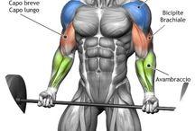 Muskel .3